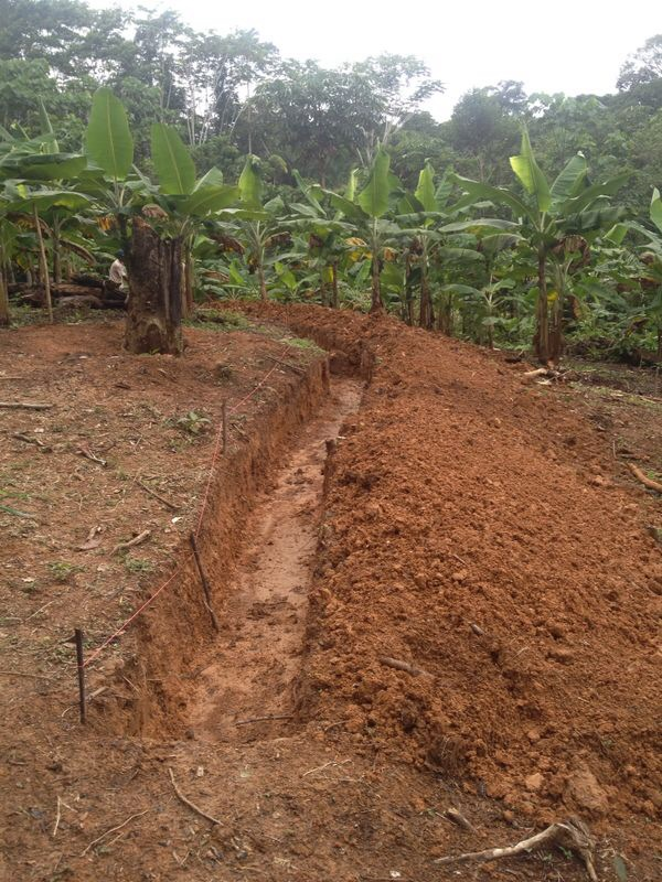 contour swale in food forest