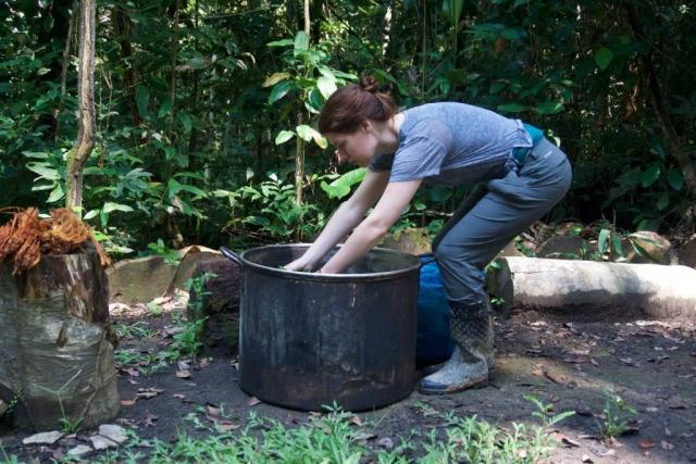 ayahuasca medicine preparation