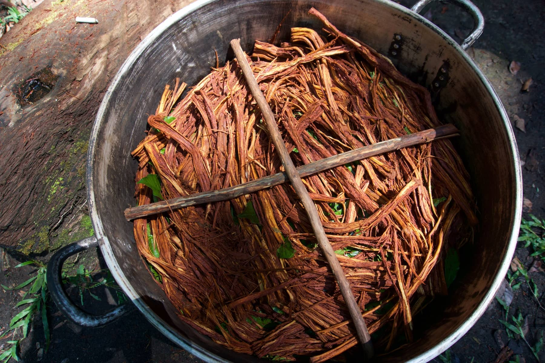 Ayahuasca medicine ready for water and boiling