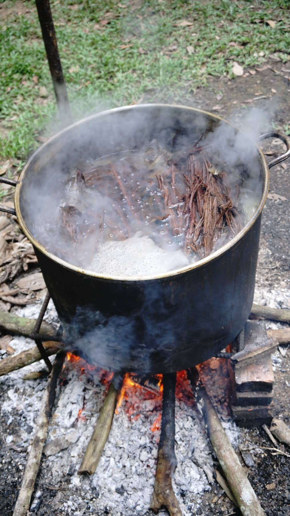 Boiling ayahuasca ingredients over fire