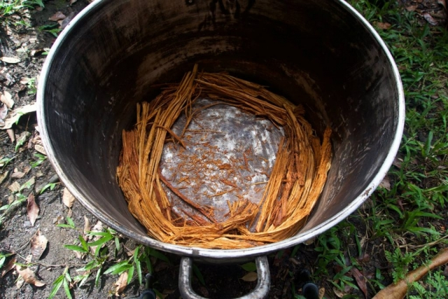 ayahuasca vine pot