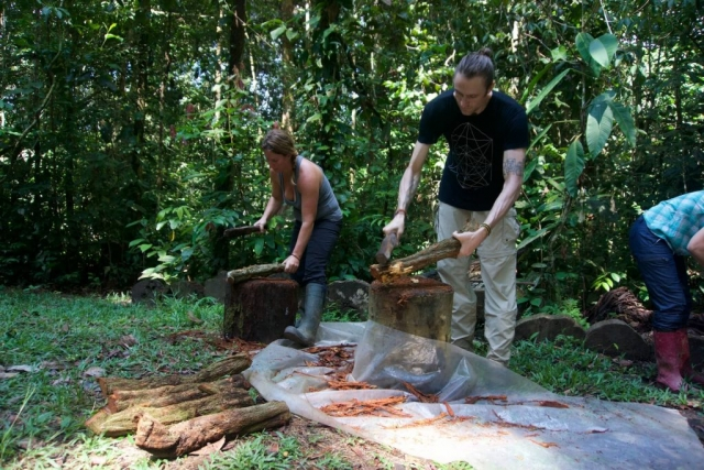 pounding ayahuasca vine