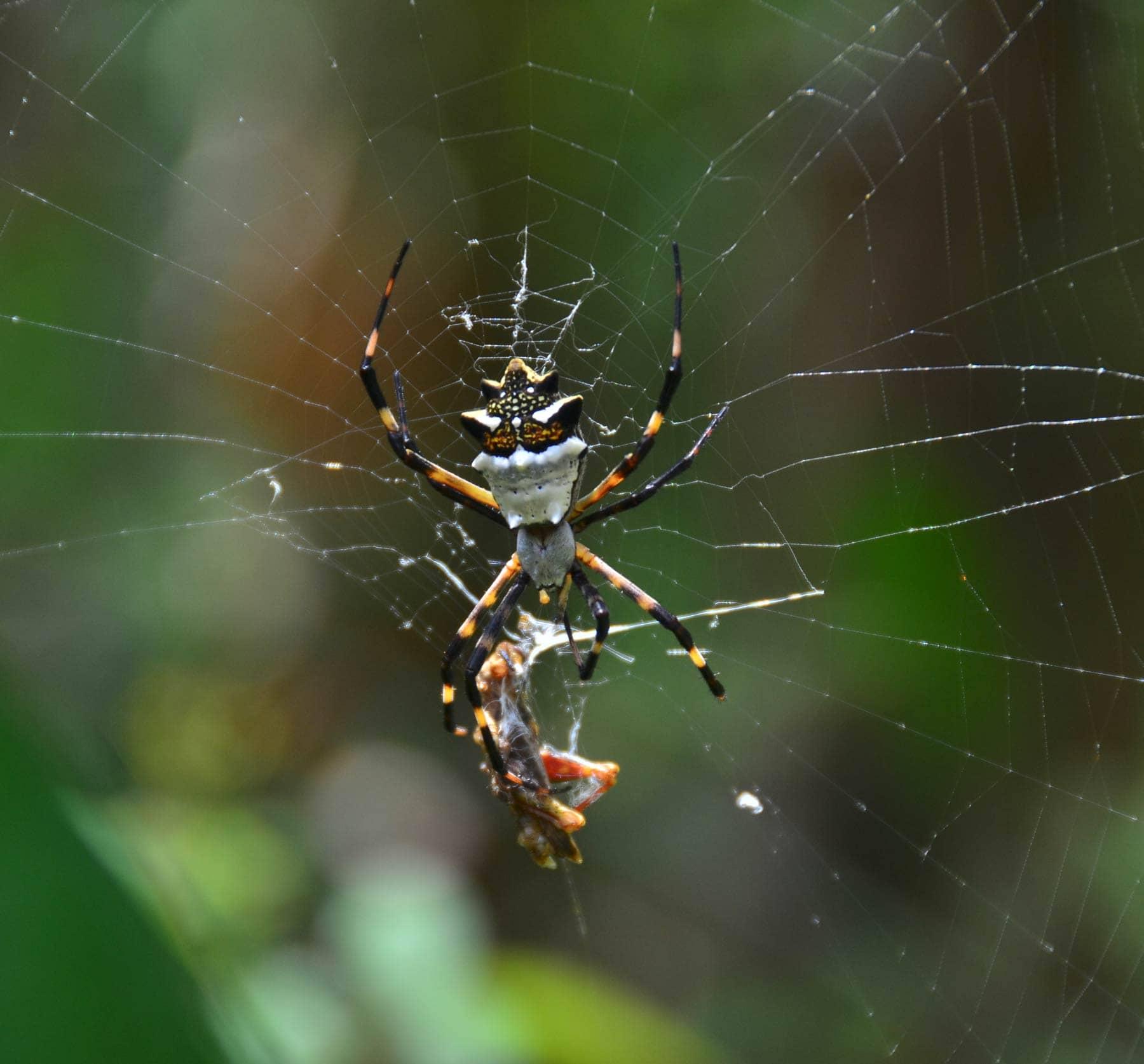 orb-weaver-spider-amazon-rainforest - Rainforest Healing ... - photo#6