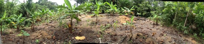 panorama of food forest