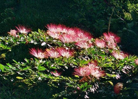 bobinsana master plant flowers